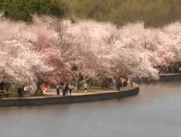 Oxycodone Ring, Plane Crash, Cherry Blossoms, Airbag Thieves, Gay Marriage, and Weird News: Week in Review